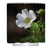 Cosmos In The Cottage Garden Shower Curtain