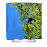 Costa Rica Capuchin Momma And Baby Aboard Shower Curtain