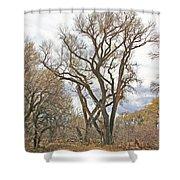 Cottonwood Az Bayou Leafless Tree Sky Clouds Path 31262019  Shower Curtain