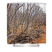 Cottonwood Az Bayou Leafless Trees Scrub Water Sand Clouds 3262019_5320 Shower Curtain