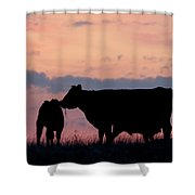 Cow And Calves After Sunset 01 Shower Curtain by Rob Graham