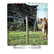 Cow By The Old Barn, Earlville Ny Shower Curtain by Gary Heller