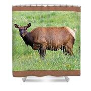 Cow Elk Grazing Shower Curtain