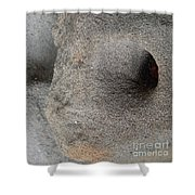 Creatures Of Sand Shower Curtain