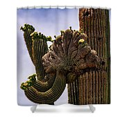 Crested  Shower Curtain