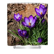 Crocus In Spring 2019 I Shower Curtain