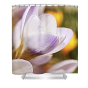 Crocus Shower Curtain by Whitney Goodey