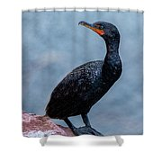 Curious Cormorant Shower Curtain