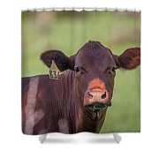 Curious Cow #636 Shower Curtain by Tom Claud