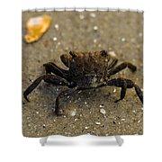 Curious Crab Shower Curtain