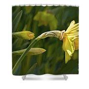 Daffodil In Sun Shower Curtain