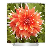 Dahlia Bloom Flower Shower Curtain
