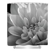 Dahlia In Monochrome Shower Curtain