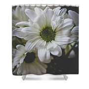Daisey Flowers 0981 Shower Curtain