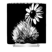 Daisy And Thistle Black And White Shower Curtain