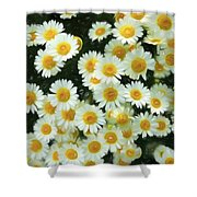 Daisy Crazy For You Shower Curtain