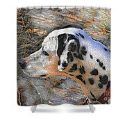 Dalmatian Dog Shower Curtain