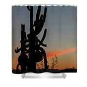 Dancing Saguaro Cactus Shower Curtain