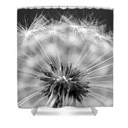 Dandelion Seeds Pod Macro Shower Curtain