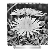 Dandelion Up Close And Personal Black And White Shower Curtain
