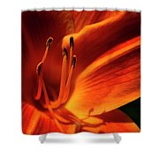 Day Lily Delight Shower Curtain