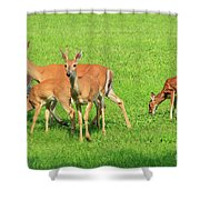 Deer Looking At You Shower Curtain