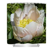 Delicate Pastel Peach Cupped Peony Blossom Shower Curtain