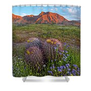 Desert Bluebell In Spring With Barrel Shower Curtain