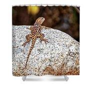 Desert Spiny Lizard H1809 Shower Curtain by Mark Myhaver