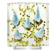 Desserted Shower Curtain