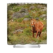 Digital Watercolor Painting Of Stunning Image Of Wild Pony In Sn Shower Curtain