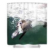 Dive Penguin Dive Shower Curtain