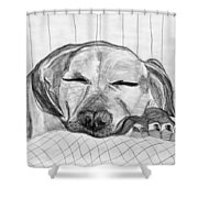 Django Napping Shower Curtain