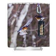 Docking Bluebird Shower Curtain