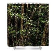Dogwood Tree 2 Shower Curtain