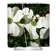 Dogwood V 2019 Shower Curtain