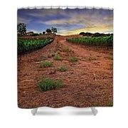 Domaine Vineyards Shower Curtain