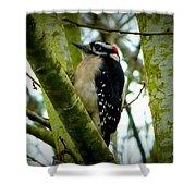Don't Move Bird Shower Curtain