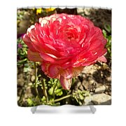 Double Coloured Rose Shower Curtain