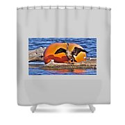Double Crested Cormorant    Drying Wings         September        Indiana Shower Curtain