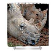 Double Rhino Shower Curtain