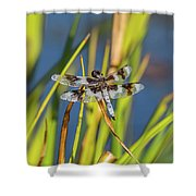 Dragonfly Perched By Pond Shower Curtain