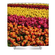 Dreaming Of Endless Colorful Tulips Shower Curtain