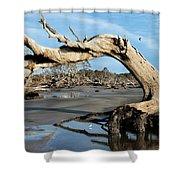 Driftwood Beach Shower Curtain