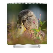 Duck 2 Shower Curtain
