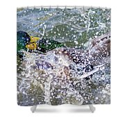 Duck Fight Shower Curtain