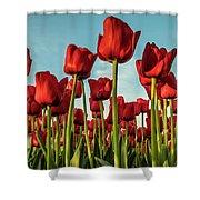 Dutch Red Tulip Field. Shower Curtain