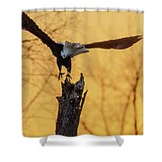 Eagle Flying Off Shower Curtain by Steven Santamour