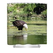 Eagle's Drink Shower Curtain