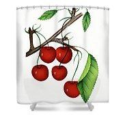 Early Richmond Cherries Shower Curtain